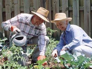Дачная аптечка и безопасность работ на садовом участке