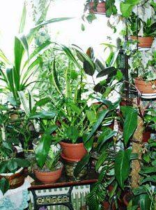 Подкормка домашних растений