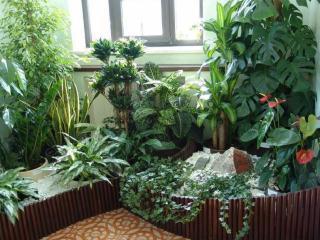 Освещеннность и выбор места для комнатных растений