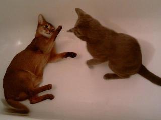 Интересно про кошек