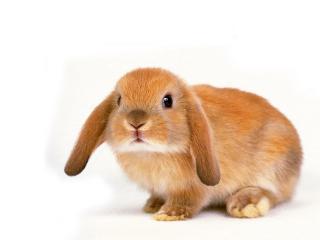 Новый 2011 год - год белого металлического Кролика (Кота, Зайца)