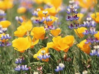 Натуральная косметика. Полевые цветы в рецептах красоты (уход за лицом)