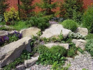 Растения для рокариев, альпинариев и альпийских горок
