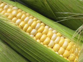 Кукурузуа в рецептах народной медицины