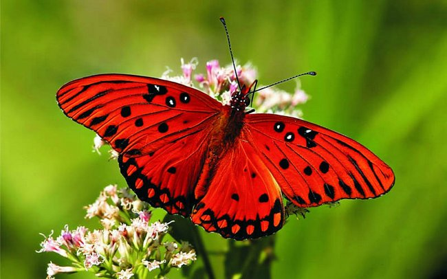 Мир бабочек. Что мы о них знаем