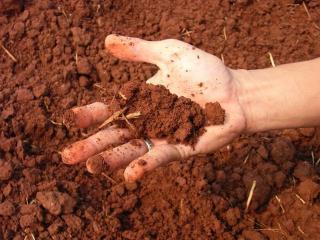 Как определить тип почвы в вашем саду?