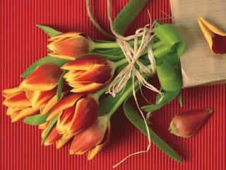 За что я люблю и не люблю праздник 8 марта