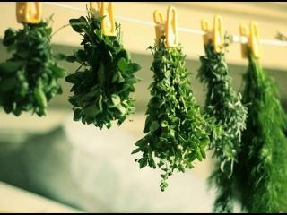 Заготовка на зиму зелени и пряных трав: рецепты заготовок