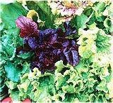 Полезные продукты. Свежая зелень – пища долгожителей