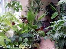 Правильный зимний уход за комнатными растениями