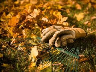 Осень на садовом участке