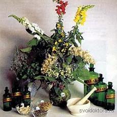 Лекарственные растения при заболеваниях органов пищеварения