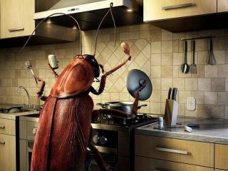 Тараканы в доме! SOS!