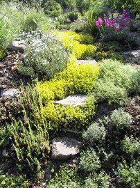 Альпинарий: устройство альпийской горки в вашем саду