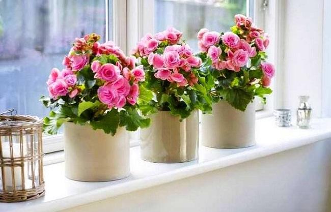 Хитрость, с которой растения буквально цветут и пахнут