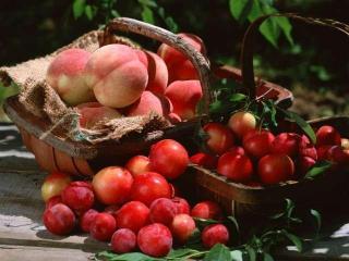 Как сохранить урожай фруктов?