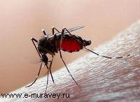 Старинные рецепты от комаров, мух, муравьев и пр.