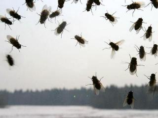 ...Когда б не комары да мухи...