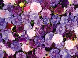 Флоротерапия - лечение цветами