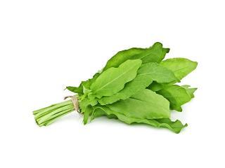 Щавель: весенняя зелень  для здорового питания