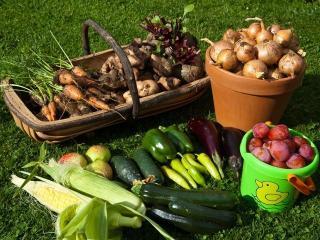Как будем хранить урожай?
